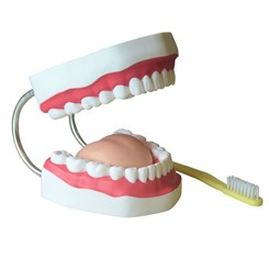 Arcada Dentária Com Língua e Escova