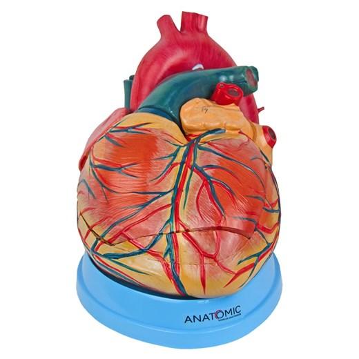 Coração Ampliado 3 Partes