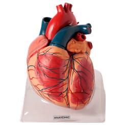 Coração Ampliado 3 Partes Luxo
