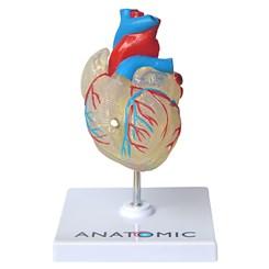 Coração Transparente 2 Partes