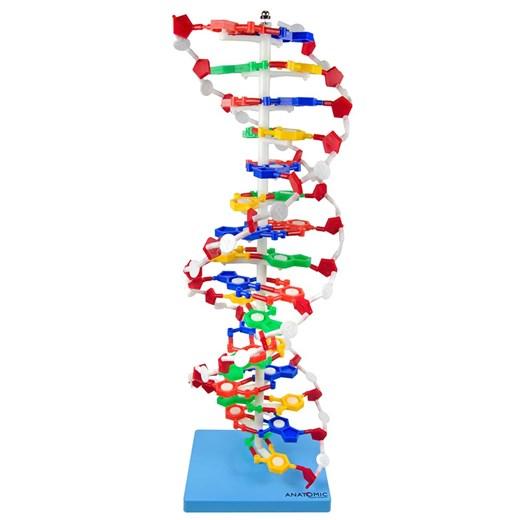 Dupla Hélice de DNA