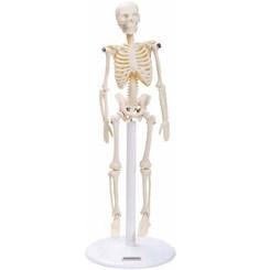 Esqueleto 20 cm