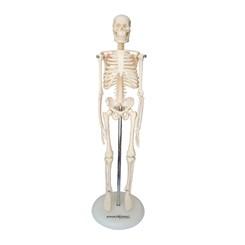 Esqueleto 45 cm