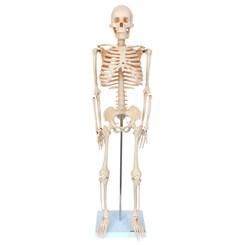 Esqueleto 85 cm