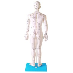 Modelo Acupuntura Masculino 50cm