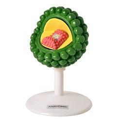 Modelo do Vírus HIV