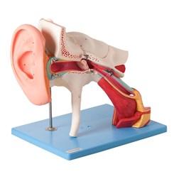 Ouvido Ampliado Clássico 8 Partes Com 58 Posições Para Estudos