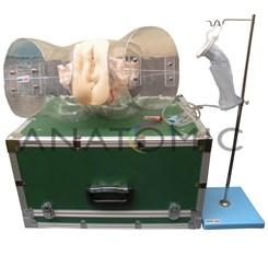 Simulador Transparente de Curetagem