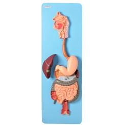 Sistema Digestório Luxo 3 partes